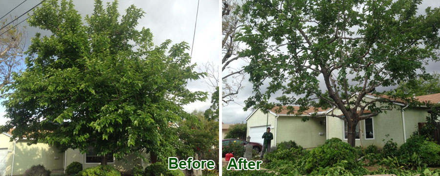 Before & After Tree Trimming