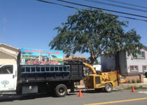 Residential Tree Removal Point Loma