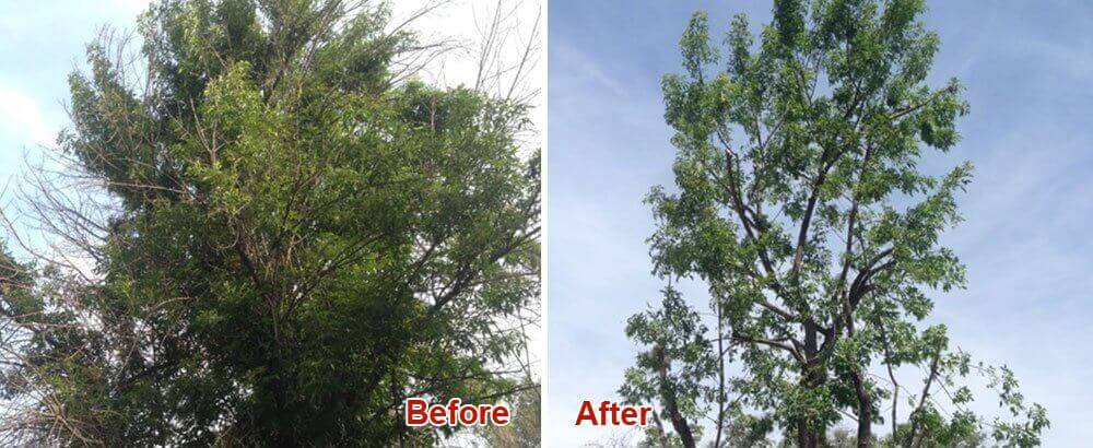 Residential Tree Care Service