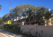 Commercial Tree Care City Heights