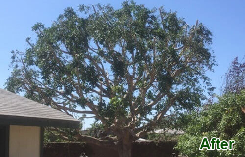 Home Tree Shaping Specialists