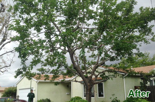 Tree Trimming Experts San Diego